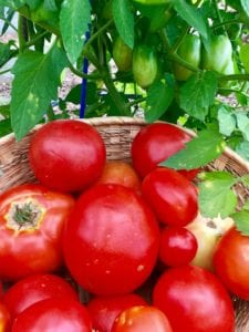 Tomatoes – June Gardening Tips from The Culinary View