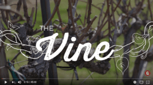 I AM The True Vine by Brian Fisher at Grace Bible Church in College Station, Texas