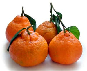 Satsuma Mandarins – December Gardening Tips from The Culinary View