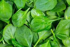 Spinach – February Gardening Tips from The Culinary View