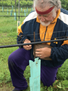 Benefits of Grow Tubes in the Vineyard