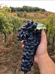 Sagrantino Triumphs in Texas and Beyond